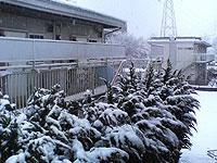 写真:センター試験は雪
