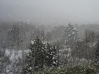 雪の降る志賀高原